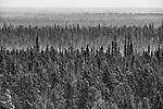 Mist rolls around the trees in the Northwest Territories.