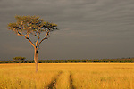 Africa  Kenya Masai Mara  Tracks