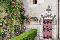France, Indre-et-Loire, Langeais, château et jardin de langeais, porte de tourelle et rosier 'Théo evethau '