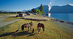 Musterers with horses and dogs control a mob of sheep at Mount Nicholas Station. The Steamship 'Earnslaw' in background Lake Wakatipu. Otago Region, New Zealand.