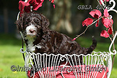 Bob, ANIMALS, REALISTISCHE TIERE, ANIMALES REALISTICOS, dogs, photos+++++,GBLA4276,#a#, EVERYDAY