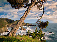 Overhanging tree and surf at Samuel H. Boardman State Scenic Corridor. Oregon