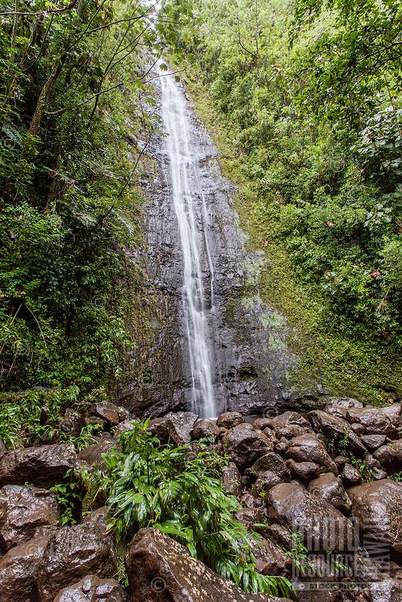 Lush Manoa Falls in Manoa Valley, Honolulu, O'ahu.