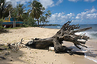 A large piece of driftwood, blown ashore by a storm, sits on the beach at Six Men's Bay