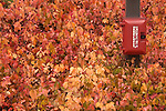 fall leaf texture study with emergency box in parking lot