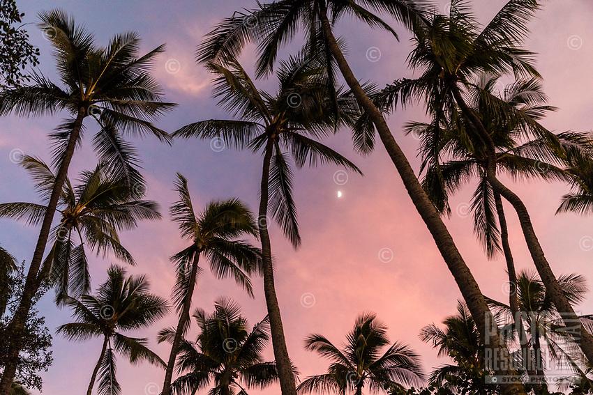 Grove of palm trees encircle the moon at sunset, Pua'ena Point, Hale'iwa, North Shore, O'ahu.