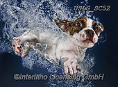 REALISTIC ANIMALS, REALISTISCHE TIERE, ANIMALES REALISTICOS, dogs, paintings+++++SethC_Popcicle_IMG_0241v5BOOKSMOOTH,USLGSC52,#A#, EVERYDAY ,underwater dogs,photos,fotos ,Seth