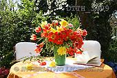 Helga, FLOWERS, nature  photos, DTTH3499,#F# Blumen, Natur, flores, naturaleza