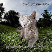REALISTIC ANIMALS, REALISTISCHE TIERE, ANIMALES REALISTICOS, cats, paintings+++++,USLGSC162044508,#A#, EVERYDAY ,photos,fotos,pounce,cat,cats,kitten,kittens,Seth