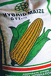 Hybrid maize on  sale  in  a rural village in  India, Nr Bangalore