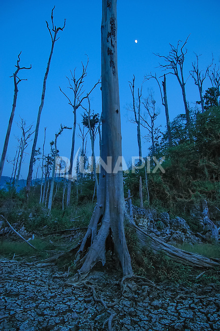 A blue dusk sky makes the the standing corpses of burned trees near Lake Tebo, Sangkulirang, a stark reminder of Borneo's 1997 forest fires.