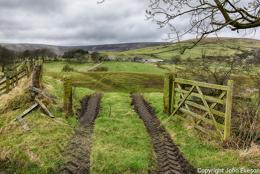 Open wooden gate and tractor tyre tracks in to a farm grass field, Chipping, Lancashire.