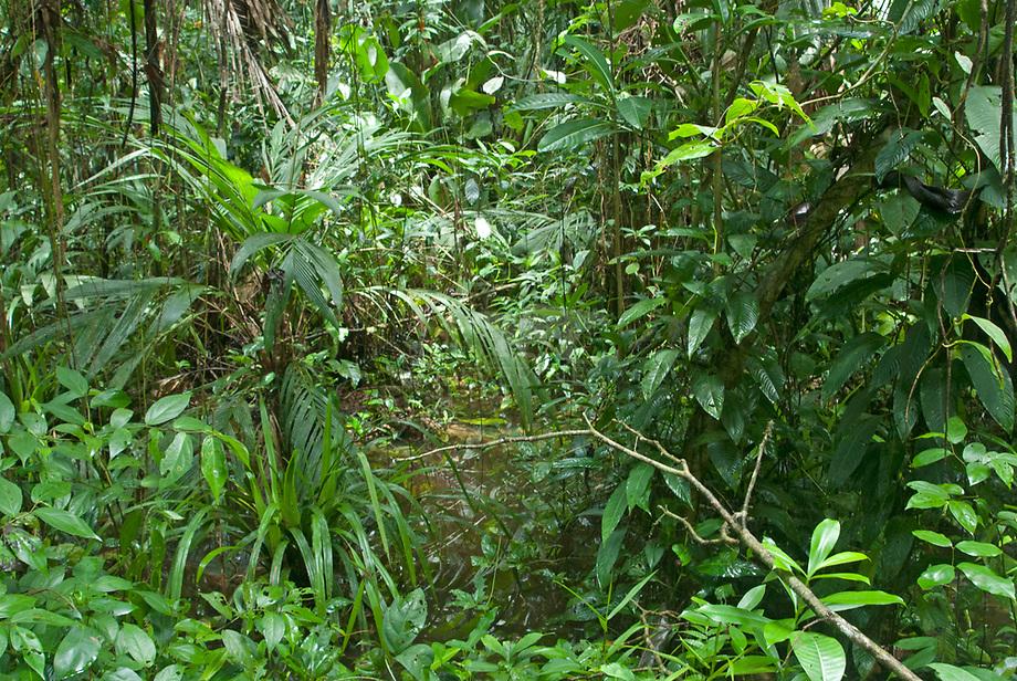 Tropisch regenwoud, Costa Rica