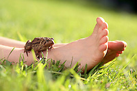 Stock Photo of a Toad Sitting on a Boy's Ankle While Laying in the Grass on a Summer Afternoon