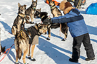 A young Elim student pets Pete Kaiser dogs at the Elim checkpoint on Monday March 14th during the 2016 Iditarod.  Alaska    <br /> <br /> Photo by Jeff Schultz (C) 2016  ALL RIGHTS RESERVED