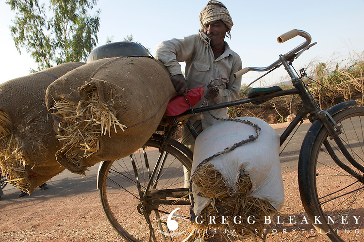 A farmer uses his steel framed utility cycle to carry massive loads back to his cattle.