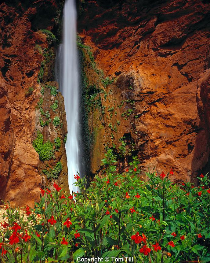 Deer Creek Falls & Monkeyflowers, Grand Canyon National Park, Arizona   Colorado River Canyon    Mimulus sp.