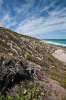 A steep coastal dune crumbles into the ocean, Kangaroo Island, South Australia.