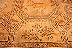 Basilica of Aquileia with a 4th century mosaic floor, rediscovered between 1909-1912; the mosaic floor is the largest Paleo-Christian mosaic in the western world