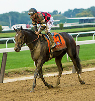 OCTOBER 7, 2018 : Cassies Deamer in the Frizette Stakes at Belmont Park on October 6, 2018 in Elmont, NY.  Sue Kawczynski/ESW/CSM