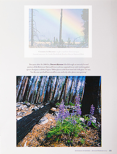 Nelson Kenter photo of lupine flowers growing after a forest fire in the Bitterroot Mountains in Montana. Used in a magazine photo issue