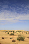 Israel, Negev, the desert near Halutza