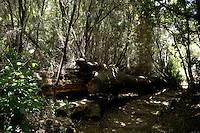 Tree trunk in Parque nacional de Garajonay forests, La Gomera, Canary Islands,Spain