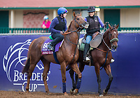 DEL MAR, CA - NOVEMBER 02: Cotai Glory, owned by Kangyu Int. Racing (HK) & Mr. F. Ma and trained by Charles Hills, exercises in preparation for Breeders' Cup Turf Sprint at Del Mar Thoroughbred Club on November 2, 2017 in Del Mar, California. (Photo by Kazushi Ishida/Eclipse Sportswire/Breeders Cup)