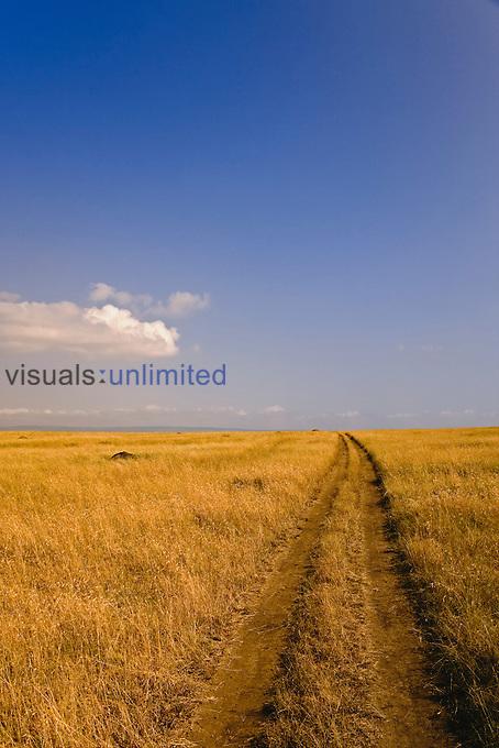 Vehicle tracks across vast grass plain of the Masai Mara Game Reserve, Kenya.