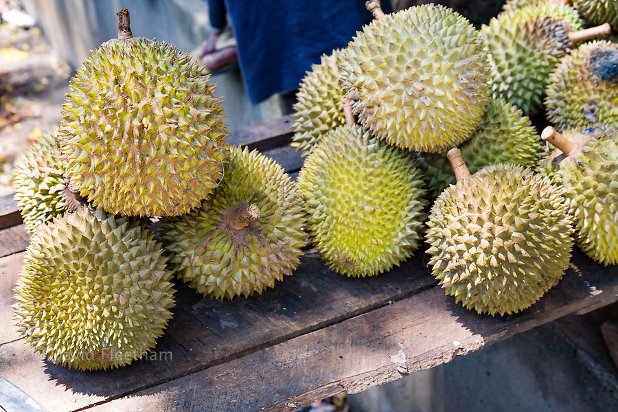 "Durian, Durio zibethinus, for sale on the side of the road. The name 'durian' is derived from the Malay-Indonesian languages word for duri or ""spike"", a reference to the numerous spike protuberances of the fruit. There are 30 recognised Durio species, at least nine of which produce edible fruit, Sri Lanka."