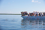 Tourists Viewing Bottlenose Dolphins