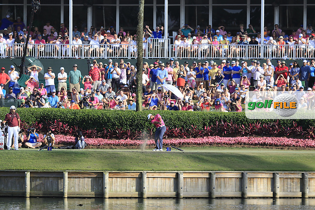 Jason Day (AUS) playing onto the 17th green during the final round of the Players, TPC Sawgrass, Championship Way, Ponte Vedra Beach, FL 32082, USA. 15/05/2016.<br /> Picture: Golffile | Fran Caffrey<br /> <br /> <br /> All photo usage must carry mandatory copyright credit (&copy; Golffile | Fran Caffrey)