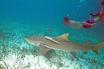 Rick Kirkham & Lemon Shark