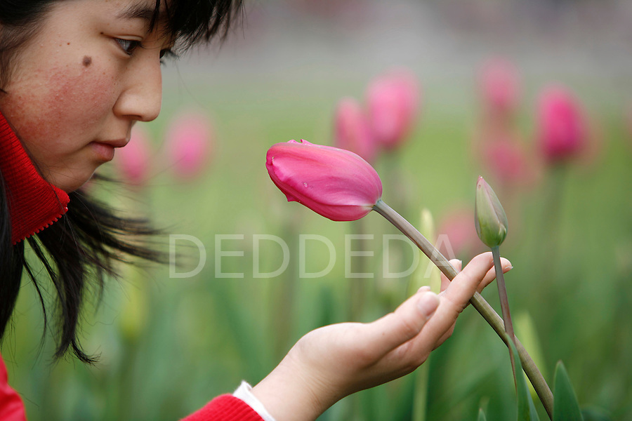 Yuri Shimizu, 15, a visitor from Kobe, Japan, takes a close look at a tulip near the Fairmont Empress Hotel in Victoria's Inner Harbour.