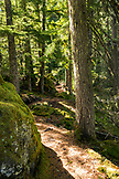 USA, Oregon, Oregon Cascades, the beautiful scenery in the Wilamette National Forest during early Fall on the hike to Proxy Falls