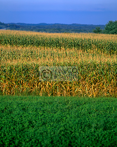 CORNFIELD PENNSYLVANIA USA