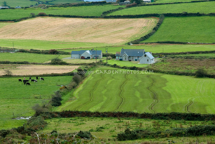 Landscape County Cork, Ireland, farmhouse, hedgerows, cows, pastures, green