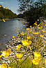The Ystwyth River on a hot summers day with beautifull flowers adorning the banks. This spot is about 10 miles inland from Aberystwyth.<br />