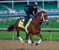 May 1, 2014: Danza, trained by Todd Pletcher, exercises in preparation for the Kentucky Derby at Churchill Downs in Louisville, KY. Scott Serio/ESW/CSM