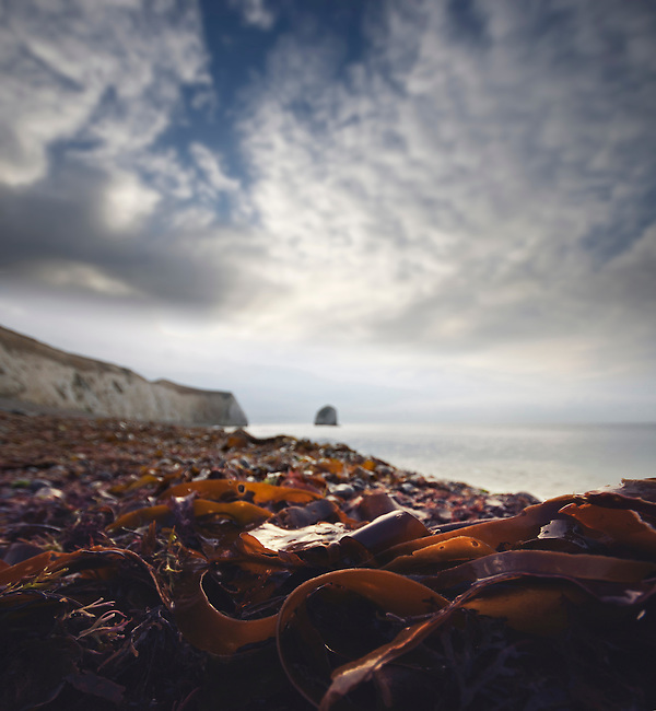 Seaweed on the beach at Freshwater Bay