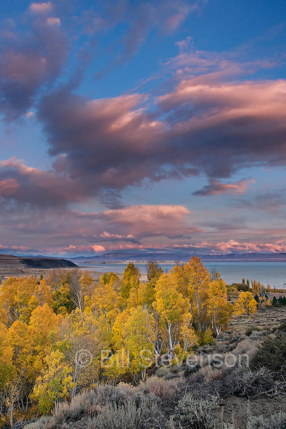 Fall yellow aspen trees with sunset clouds above Mono Lake in California