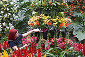 "London, UK. 5 February 2015. Kew Gardens horticulturalist Elisa Biondi prepares a floral display. ""Alluring Orchids"" is the first festival on the Royal Botanic Gardens' 2015 calendar which showcases thousands of exotic and rare flowers in the Princess of Wales Conservatory from 7 February to 8 March 2015."