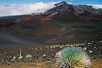 These hardy Silversword plants are the signature of HALEAKALA NATIONAL PARK on Maui in Hawaii