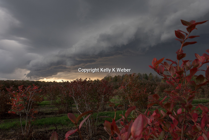 Rolling front over blueberry field in Bangor, Michigan