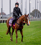 November 1, 2018: East (GB), trained by Kevin A. Ryan, exercises in preparation for the Breeders' Cup Juvenile Fillies Turf at Churchill Downs on November 1, 2018 in Louisville, Kentucky. Carolyn Simancik/Eclipse Sportswire/CSM