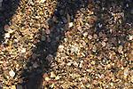 Coins in stream. Wishing water. Peddler's Village, Bucks County, PA.
