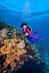 9 June 2014:: SCUBA diver Sally Herschorn explores Mary's Garden on the North Shore of Grand Cayman Island. Located in the British West Indies in the Caribbean, the Cayman Islands are renowned for excellent scuba diving, snorkeling, beaches and banking.  Mandatory Credit: Ed Wolfstein Photo *** RAW (NEF) Image File Available ***