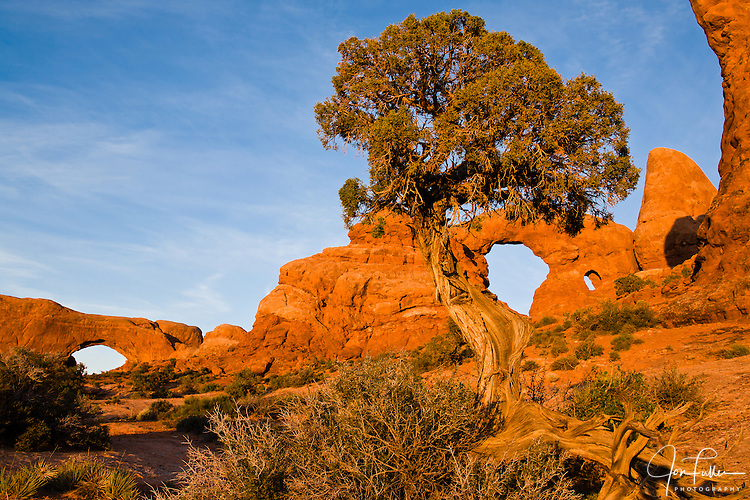 The North Window and Turret Arch, framed by a juniper tree, in Arches National Park near Moab, Utah, USA at sunset.