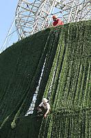 FOTO EMBARGADA PARA VEICULOS INTERNACIONAIS. SAO PAULO, SP, 28-11-2012, MONTAGEM ARVORE DE NATAL. A montagem da Arvore de Natal que fica no Pq. do Ibirapuera, continua recebendo as decoracoes finais pelos operarios nessa Quarta-feira (28). Luiz Guarnieri/ Brazil Photo Press.