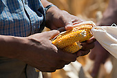 United States President Barack Obama holds ears of corn affected by the drought during his tour of the McIntosh family farm in Missouri Valley, Iowa, August 13, 2012. .Mandatory Credit: Pete Souza - White House via CNP